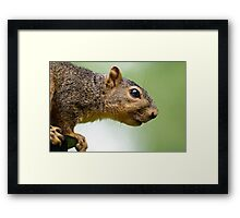 Guess who's coming to dinner! Framed Print