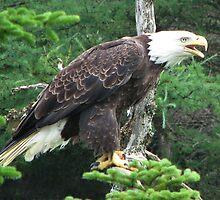 Chars Eagle by Brian Carey