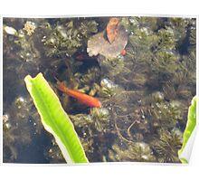 Natural Fish Tank Poster
