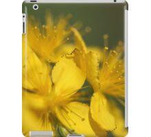 St John's Wort (Hypericum perforatum) iPad Case/Skin
