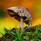 Fungi and mushrooms