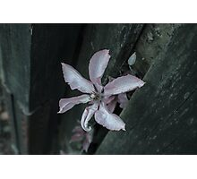Flowers through a Fence 2 Photographic Print