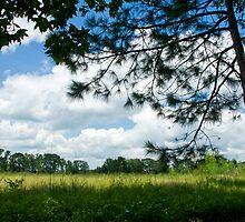 Clouds for Claudette by Bonnie T.  Barry