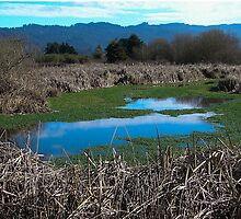 Arcata Marsh, Arcata, CA by Mary Ellen Tuite Photography