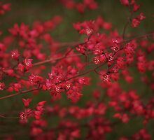 Red Flowers by Serodous