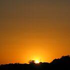Summer Gold by Graham Ettridge