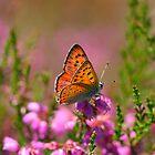 Purple-shot copper by lepreskil