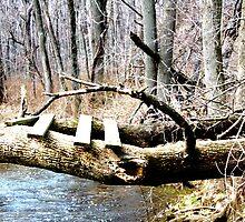 bridge in the tree by ASmith
