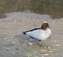 One Lone Brown Wood Duck Sticker