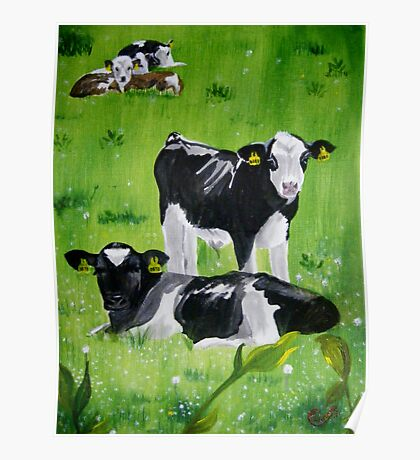 Calves in the meadow Poster