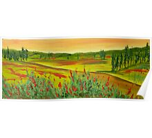 Tuscan Poppy Colours 20x 9 inches Poster