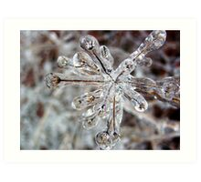 Encapsulated In Ice Art Print