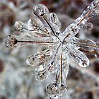 Encapsulated In Ice by Brion Marcum