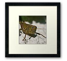 wall hopper Framed Print