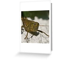 wall hopper Greeting Card