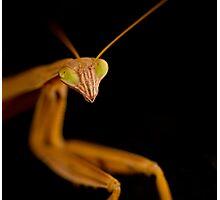 praying mantis 3 Photographic Print