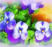 *Pretty Pansy Patch* by EdsMum