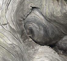 Elephant Eye  •  Sequoia Tree Trunk by Richard  Leon