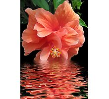 Tropical Reflection Photographic Print