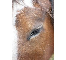Clydesdale Eye Photographic Print
