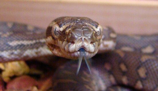 Snake Tongue by Sharon Robertson