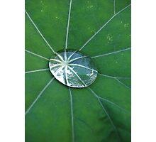 Mercurised nasturtium Photographic Print