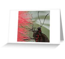 Little beauty Greeting Card