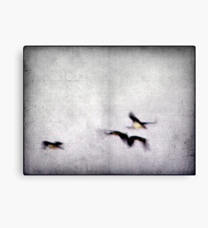 Flight of the Ibis Canvas Print