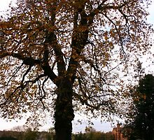 arbre et tombe by Luciee