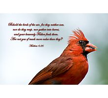 Behold the birds of the air . . . Photographic Print