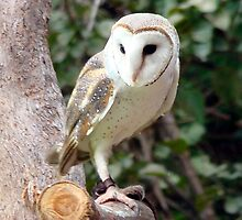 Owl you there yet? by Sharon Robertson