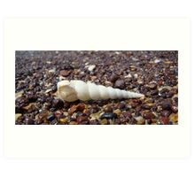 Lonely Shell Art Print