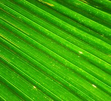 Close up of a palm leaf, Fiji by Of Land & Ocean - Samantha Goode