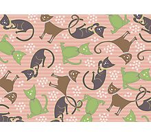 Kitties in Pink Photographic Print