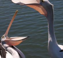 Port Hughes Pelicans Sticker