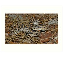Two Southern Hog-nosed Snakes  Art Print
