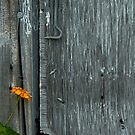 Honey Horn, Hilton Head, South Carolina by fauselr
