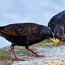 A Clash Of Beaks........... by lynn carter