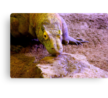 Last of the Dragons Canvas Print