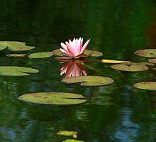 Pink Lilly by Deborah  Benoit