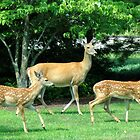 Mom & Fawns - 1 by Paul Gitto