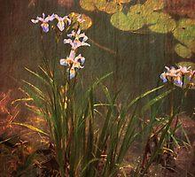 Iris' Among the Lillies by browncardinal8