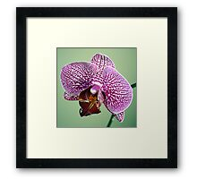 A New Day, A New Flower Framed Print