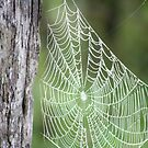 Spider? Where? by Lori Walton