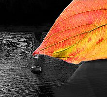 Dark Autumn by Sally Green