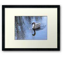 Swan And Ripples Framed Print