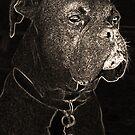 Guard Dog by David  Postgate