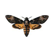 Death's-head Hawkmoth by MattHollinshead