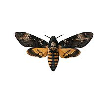 Death's-head Hawkmoth Photographic Print