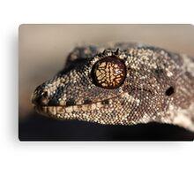 Katherine form Spiny-tailed Gecko Canvas Print